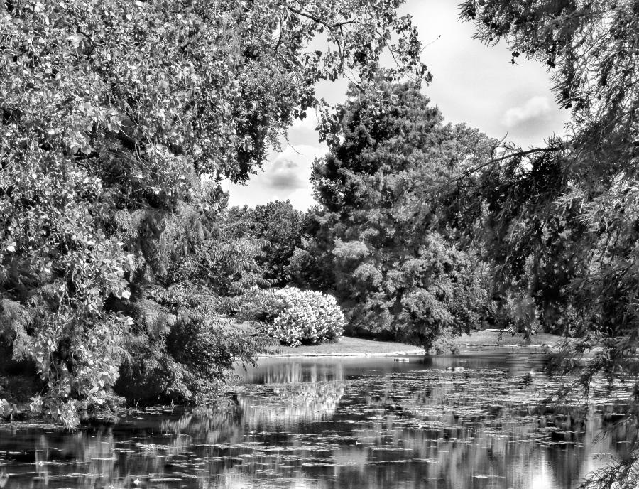 Spring Grove Lake #1