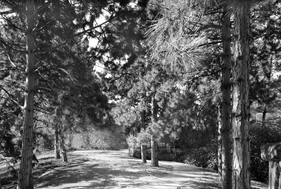 the-path